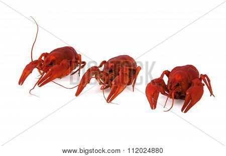 Three Boiled Crawfish On White