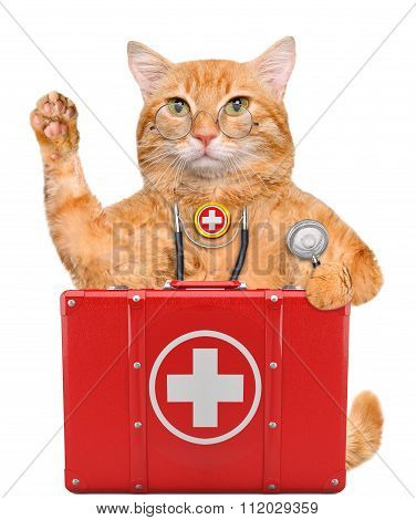 Cat with a first aid kit.