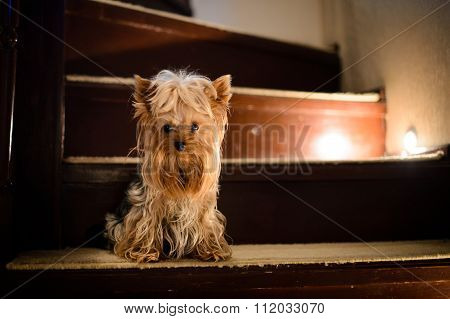 stair dog