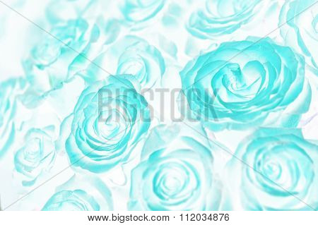 Acid Roses Bouquet. Abstract