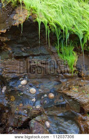 Still Life With Seashells, Wet Moss And Rocks