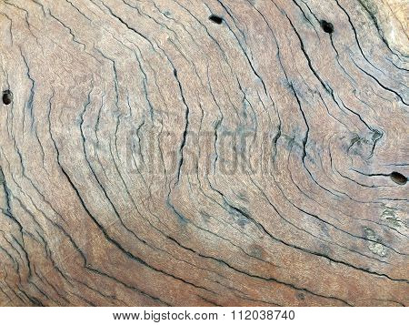 Wooden Texture With Curved Cracks
