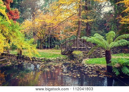 Picturesque Wooden Footbridge Over A Pond With Golden Trees And Ferns In Autumn