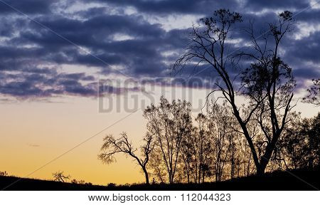 Bare Trees Silhouettes At Sunset