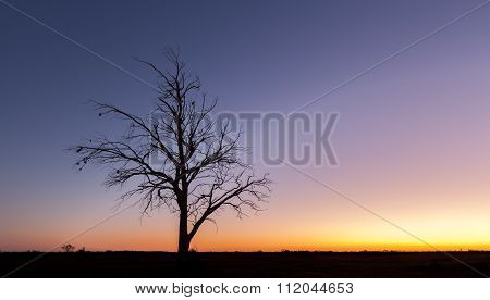 Lonely Bare Tree Silhouette At Dusk
