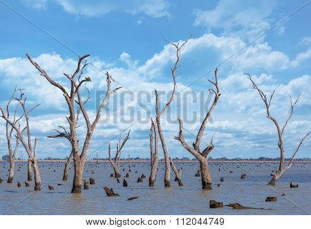 Dry Tree Trunks And Stumps At Kow Swamp, Australia