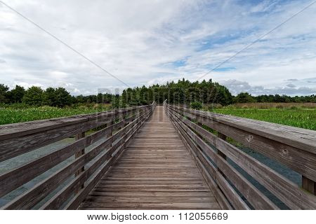 Straight Path Through Wetlands