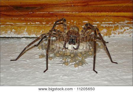 mom spider