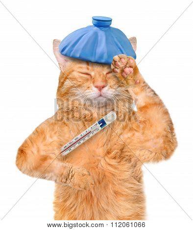 Sick cat.