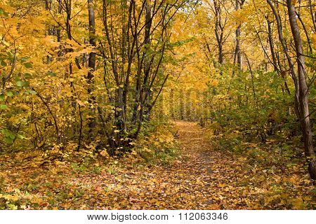 The Path Strewn With Yellow Leaves In Autumn Park