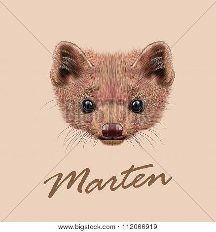 Vector Illustrated Portrait of Marten.