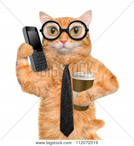 Business cat.