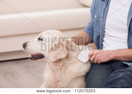 Cheerful young guy is caring of his pet