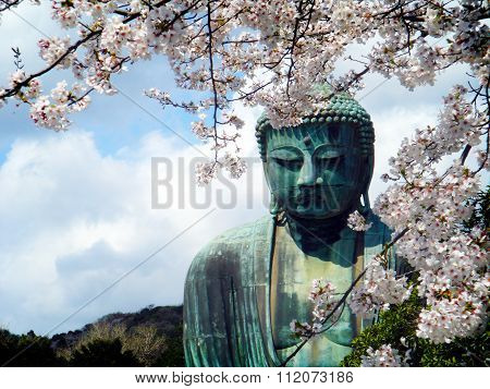 The Great Budha in Hase, Japan framed in cherry blossoms.