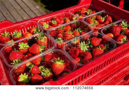 Punnets Of Strawberries Ready For Sale