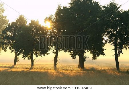 Rural scenery on a misty morning