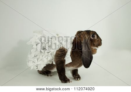 Dressed Rabbit