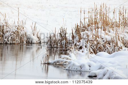 Winter Fox Tails