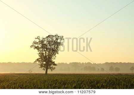 Landscape of tree in the field at dawn