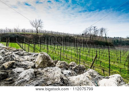 Vineyards On The Hills In Spring, Italy