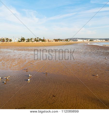 Abstract In Morocco  Sea Africa Ocean Wave And  Bird