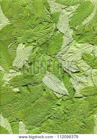 Mint Leaves.