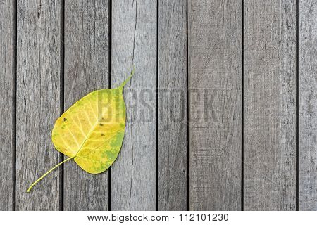 Yellow bodhi leaf on old wood floor background