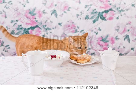 The Ginger Cat Eats Breakfast. Cookies, Cottage Cheese And Milk. Country Breakfast On The Table. Cat