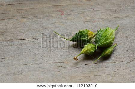 bitter cucumber on wooden board