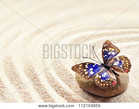 Butterfly On A Rock Of Sand With Circles