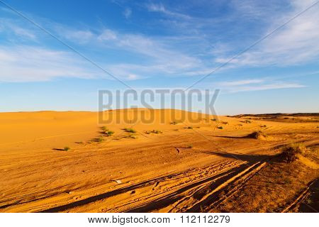 Sunshine In The Lake Yellow    Of Morocco Sand      Dune
