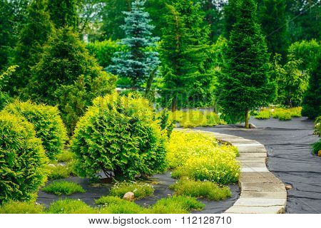 Stone pathway in garden park. Decorative Bushes In Garden