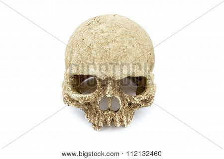 Primate Skull Isolate Background