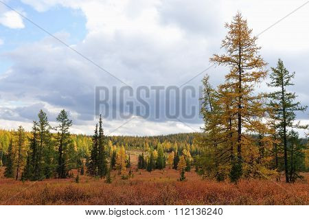 Sub-polar Ural