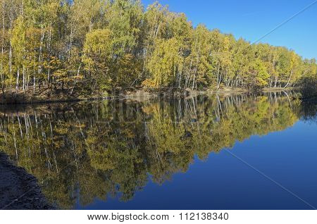 Reflection Of Trees In The Pond.