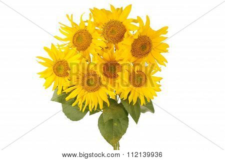 Beautiful Bouquet Of Yellow Sunflowers
