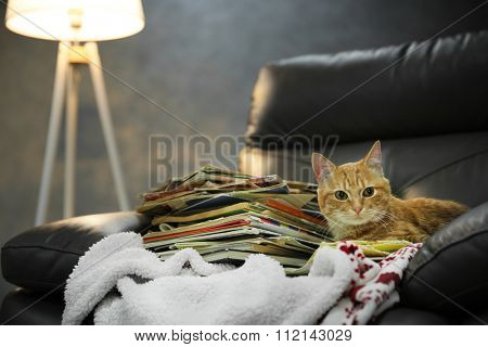 Red cat and pile of books on leather chair, close up