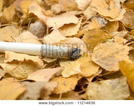 Cigaret On Foliage