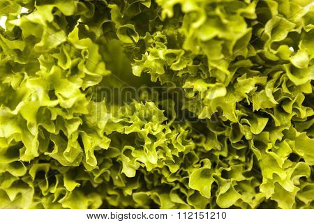 Green fresh linking of lettuce salad close up. The best healthy breakfast for the modern person