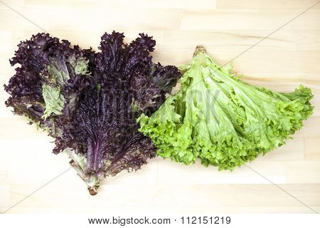 Green new  lollo rossoand  and lettuce of salad in a pot on a wooden background in country kitchen.