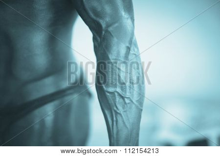 Male Bodybuilder Muscular Man