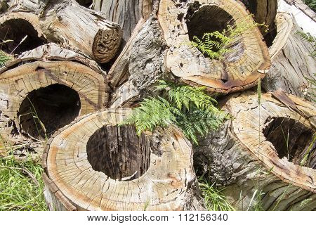 Rotted Sawn Tree Trunks