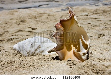 Shells On Beach 3