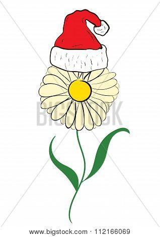 Christmas camomile in a cap