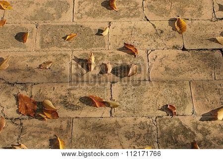 Leaves on old floors