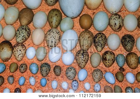 Collection Of Various Birds' Eggs