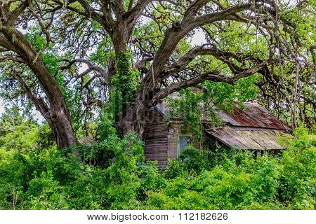 Hidden Old Abandoned Shack In Texas