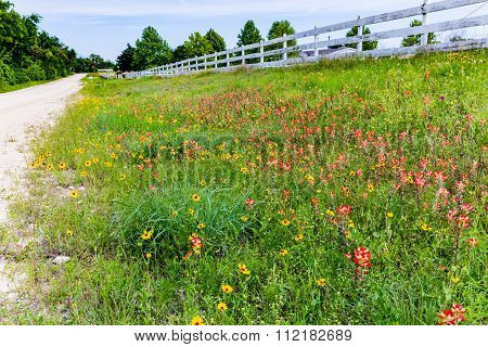Orange Indian Paintbrush And Other Wildflowers In A Texas Field With Fence.