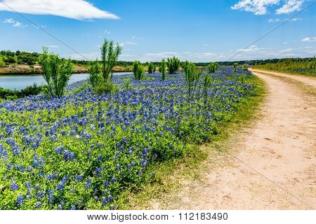 Old Texas Dirt Road In Field Of  Texas Bluebonnet Wildflowers On Colorado River In Texas
