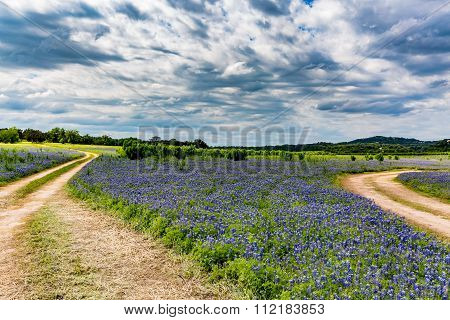Old Texas Dirt Road In Field Of  Texas Bluebonnet Wildflowers